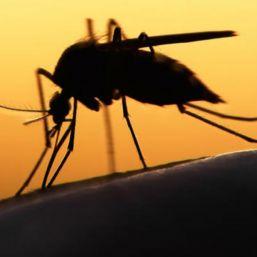 OMS confirma llegada de zika a África